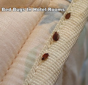 Bed Bugs in Hotel Rooms