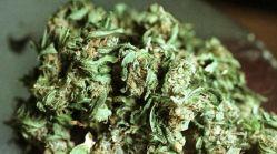 042314_acuna_marijuana_640